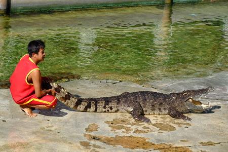 samutprakarn: SAMUTPRAKARN,THAILAND - 25 DECEMBER 2016: It is crocodile show at farm on 25 December 2016 in Samutprakarn,Thailand. This is show from tourist and people Thailand.