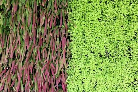paradox: Abstract  black  black ground green plant.