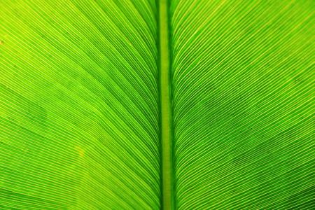 line texture line texture palm leaf.