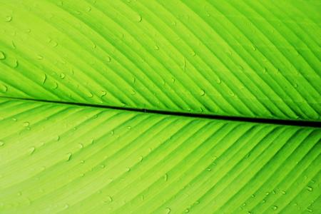 line texture line texture palm leaf. Palm background. Stock Photo