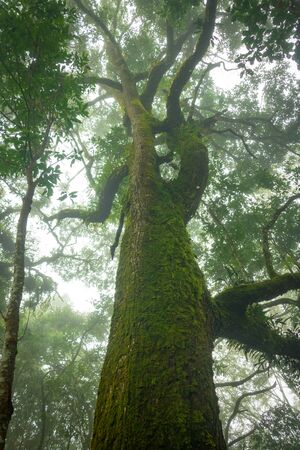 Green trees top with sky in fog. The trees in forest Thailand.fresh,good life,good air,active.