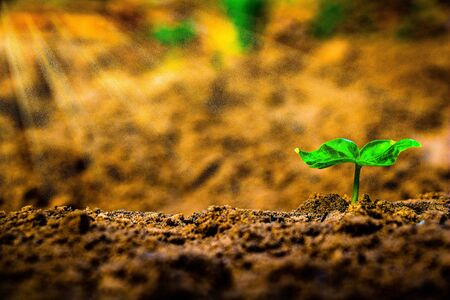 Growing plant.Young plant in the morning and light on ground background.mall plants on the ground in summer.botany,goal,seed,Photo concept for New life concept and Growing.