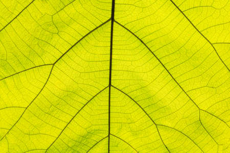 Top view leaf background.Green leaves color tone dark in the morning.Tropical Plant in Thailand,environment,good air.photo concept nature and plant. Stock fotó