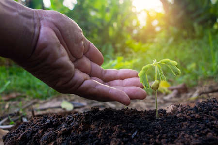 Hand touching growing plant,Young plant and hand under sunlight.Finger and Small plants on the ground in spring.New life concept.Fresh.Photo fresh and Agriculture concept idea.