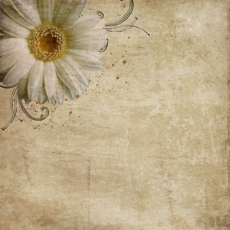 vintage shabby background with daisy photo