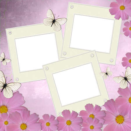 Three white frames on background with pink daisy and butterfly  photo