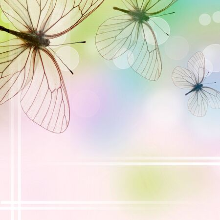 Beautiful  Background With Three Butterflies and bokeh (1 of set) photo