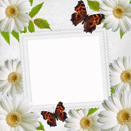 Paper frame and Flowers chamomiles and butterfly photo