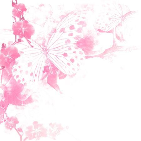 Butterflies and orchids flowers  pink background  photo