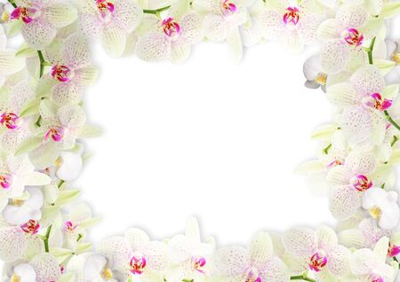 Fresh orchid border  photo