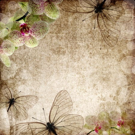 vintage background with orchids and butterfly Stock Photo - 10017501