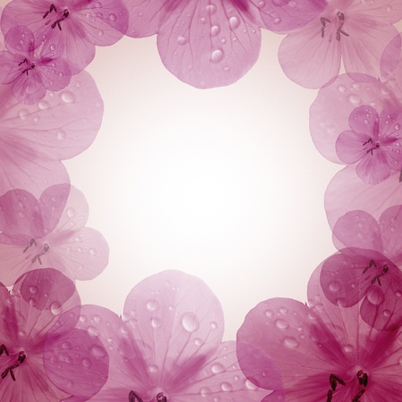 album background: pink flower frame with copy space  Stock Photo