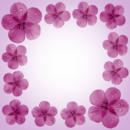pink flower frame with copy space  photo