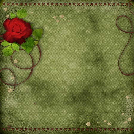 beautiful green background with red rose photo