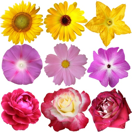 Flower collection isolated on white background  photo