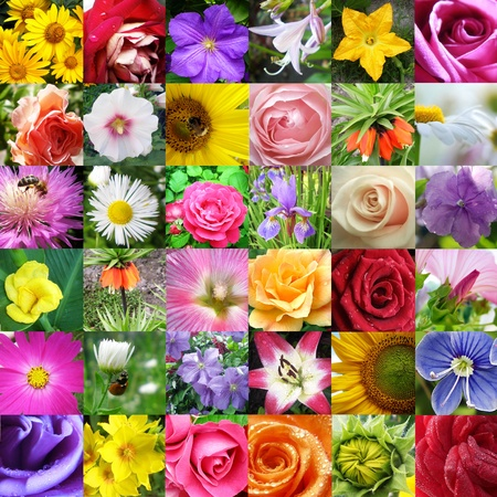 florescence: Collage from different beautiful flowers  Stock Photo