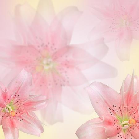 colores pastel: hermosas flores de color rosa a base de filtros de color Foto de archivo