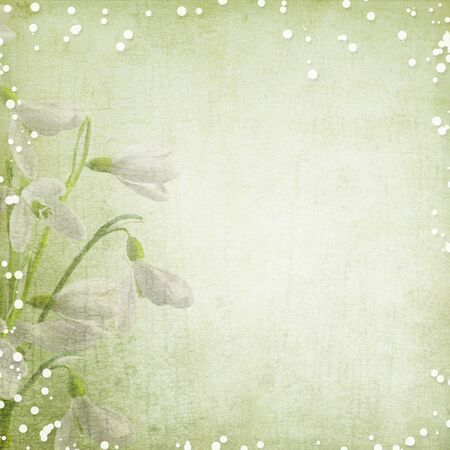album photo: spring background with snowdrops