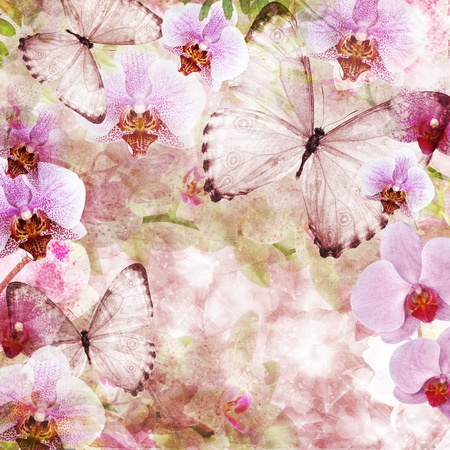 Butterflies and orchids flowers pink background ( 1 of set)  photo