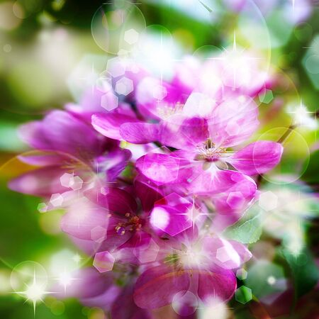 Beautiful abstract floral background with pink flower buds and defocused lights photo