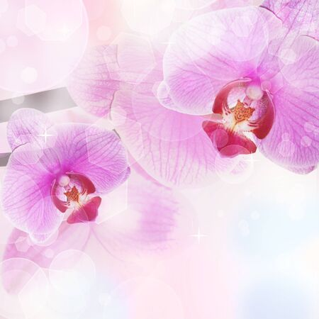 Orchid Flower background, tender blur colors and bokeh  photo