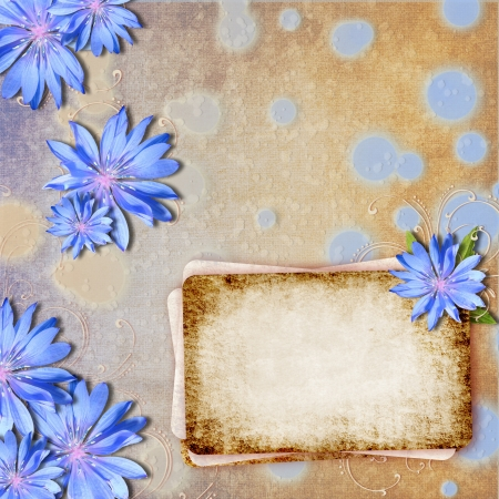 chicory flower: Grunge background with chicory