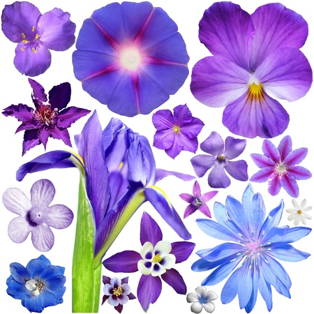 Big Set of Colorful Flowers Isolated on White Background Stock Photo