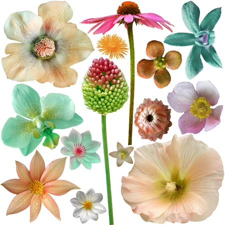 Big Selection of  Pastel Colorful Flowers Isolated on White Background. Stock Photo