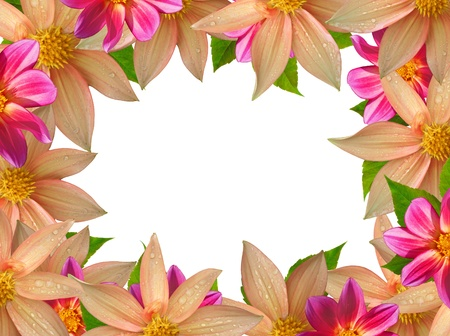 colorful flower frame isolated on white background  photo