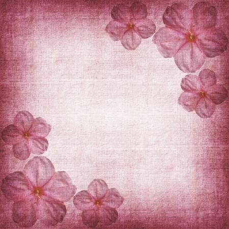 fuchsia: pink background  Stock Photo