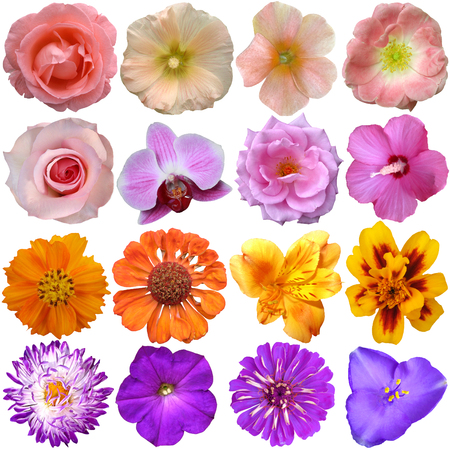 gerber flowers isolated on: Set of colorful seasonal blooms  Stock Photo