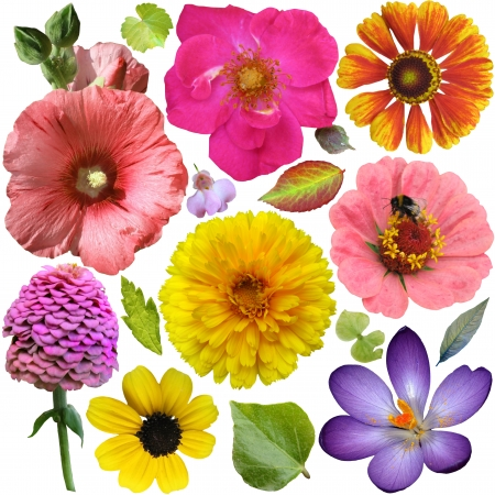 Big Selection of Colorful Flowers and Leaves  Isolated on White Background