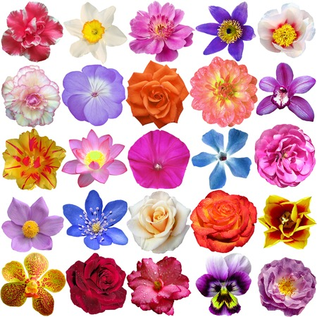 Set of Flower heads isolated on white Stock Photo