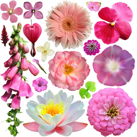 Assorted of colorful blooms  photo