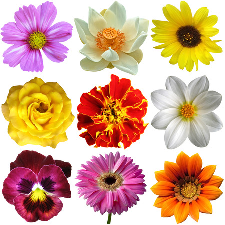 Set of flower isolated on white, close-up
