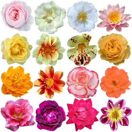 Set of colorful seasonal blooms photo