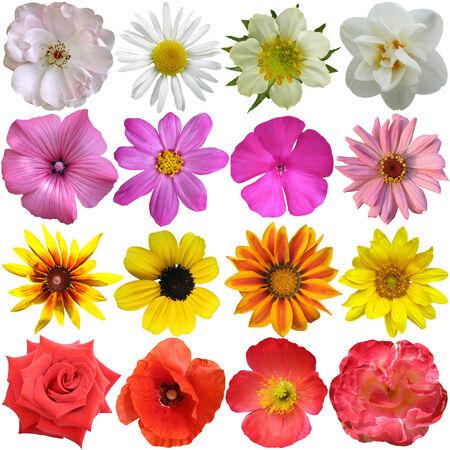 Set of colorful seasonal blooms photo