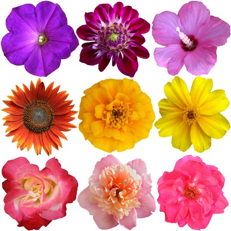 Collection of Flower heads isolated on white background photo