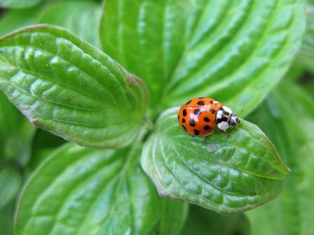 ladybug: Ladybug over green Stock Photo