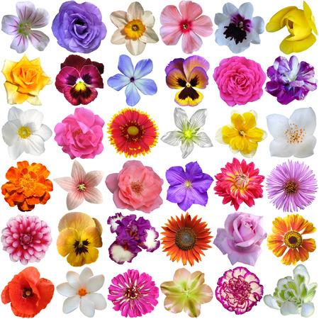 Große Auswahl von verschiedenen Blumen auf weißen Hintergrund Standard-Bild - 43335189