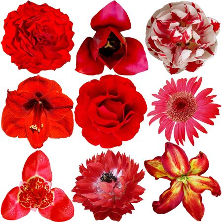 roze: Set of Different Flowers Isolated on White Background