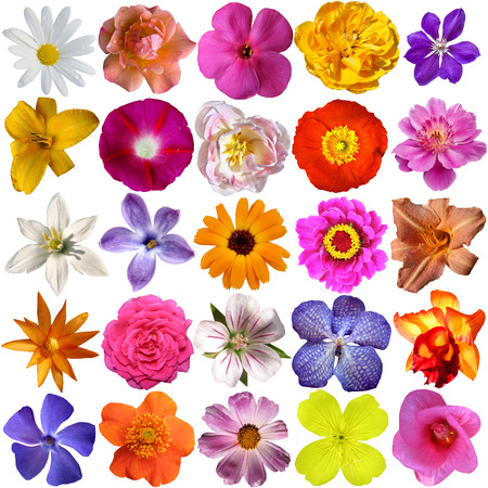 petunia wild: Big Selection of Various Flowers Isolated on White Background