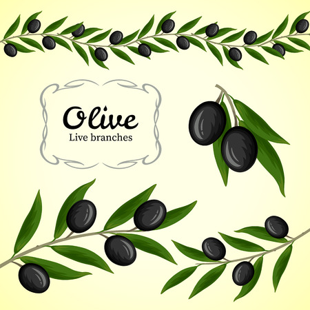 olive: Vector collection of olive branch, black olives