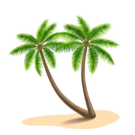 Two palm, isolated on white background