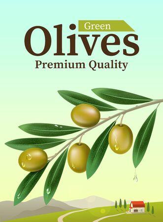 olives: Label of green olives. Realistic Olive branch. Design elements for packaging.