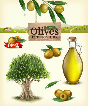 Realistic vector illustration of fruit olives, olive oil, olive branch, olive tree, olive farm. Label of green olives with realistic olive branch against the backdrop of olive plantations