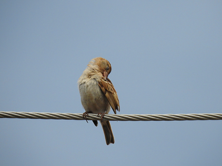 Bird on wire.