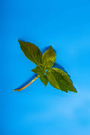 Mint leaves on a blue background