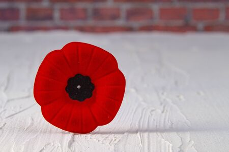 Remembrance Day Poppy Flower with a brinks Background