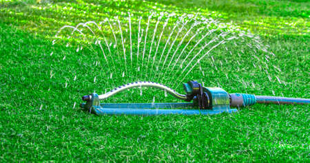 Watering green lawn during the spring with oscillating sprinkler water host